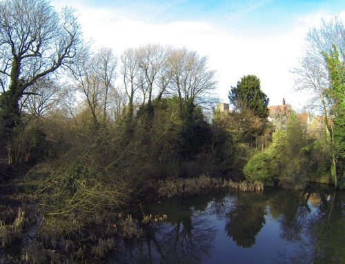 Katherines Pond, Harlow